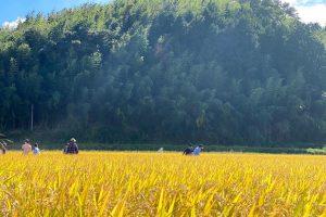 農業体験画像